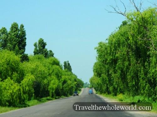 Moldova Willows