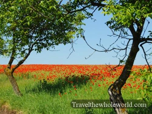 Moldova Flowers
