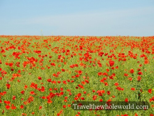 Moldova Red Flowers