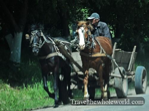 Moldova Horse