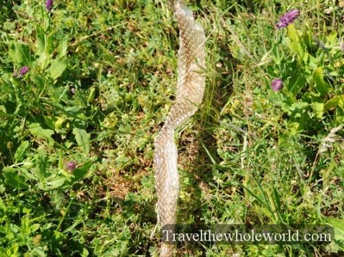 Moldova Snake Skin
