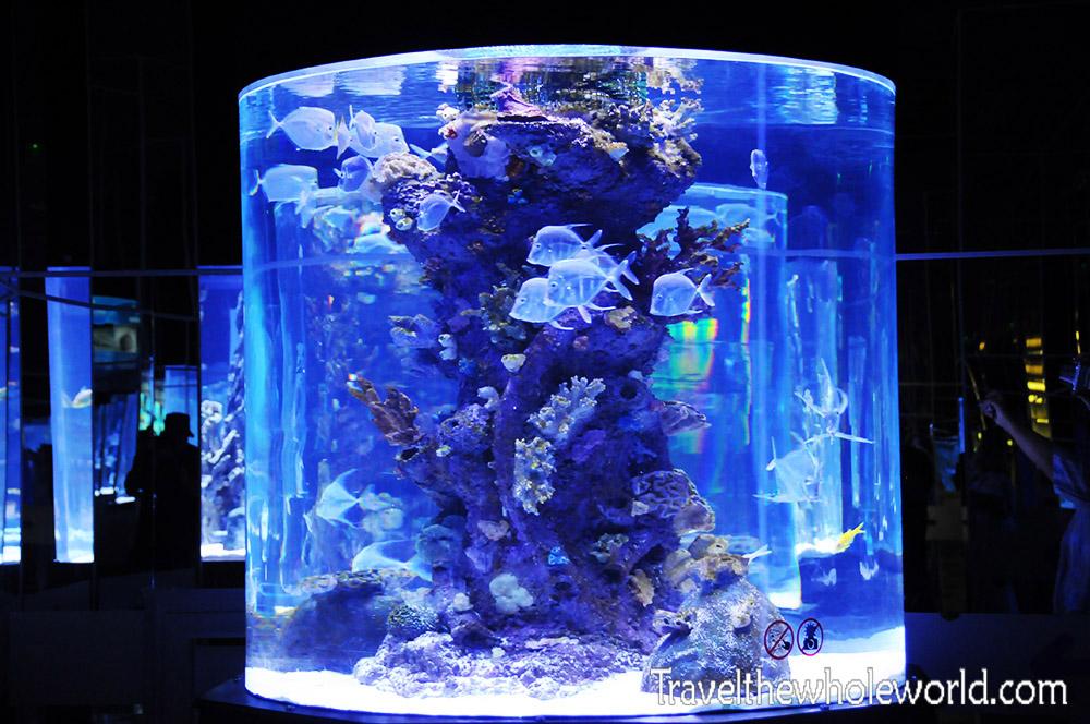 Antalya Aquarium Cylinder