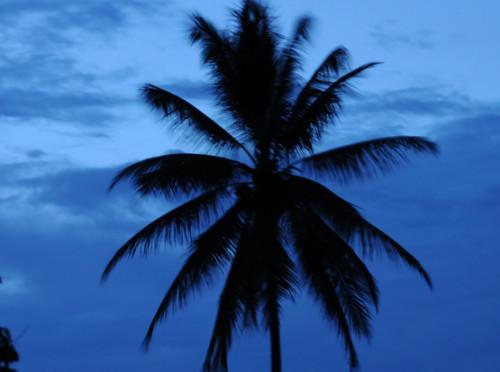 West Papua Naribe Palm