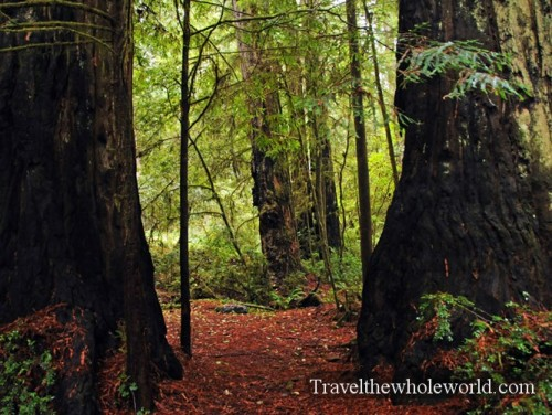 California-Redwoods-Giants2
