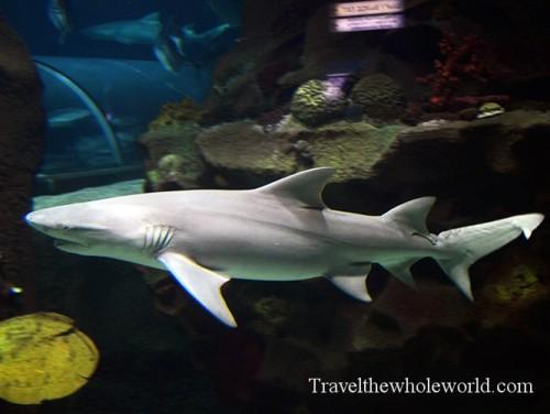 Kazakhstan Astana Duman Entertainment Aquarium Shark