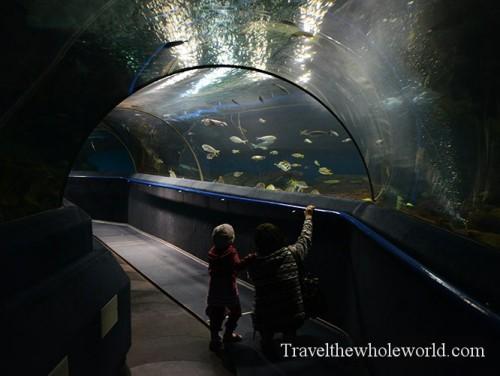 Kazakhstan Astana Duman Entertainment Aquarium Tunnel