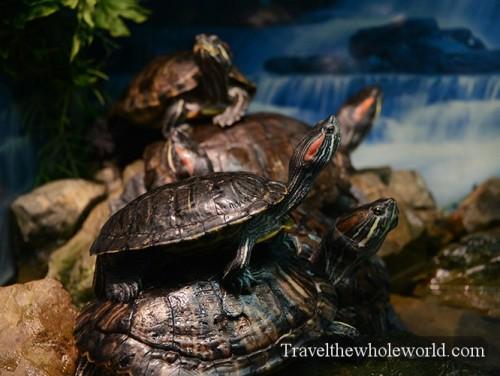 Kazakhstan Astana Duman Entertainment Aquarium Turtles