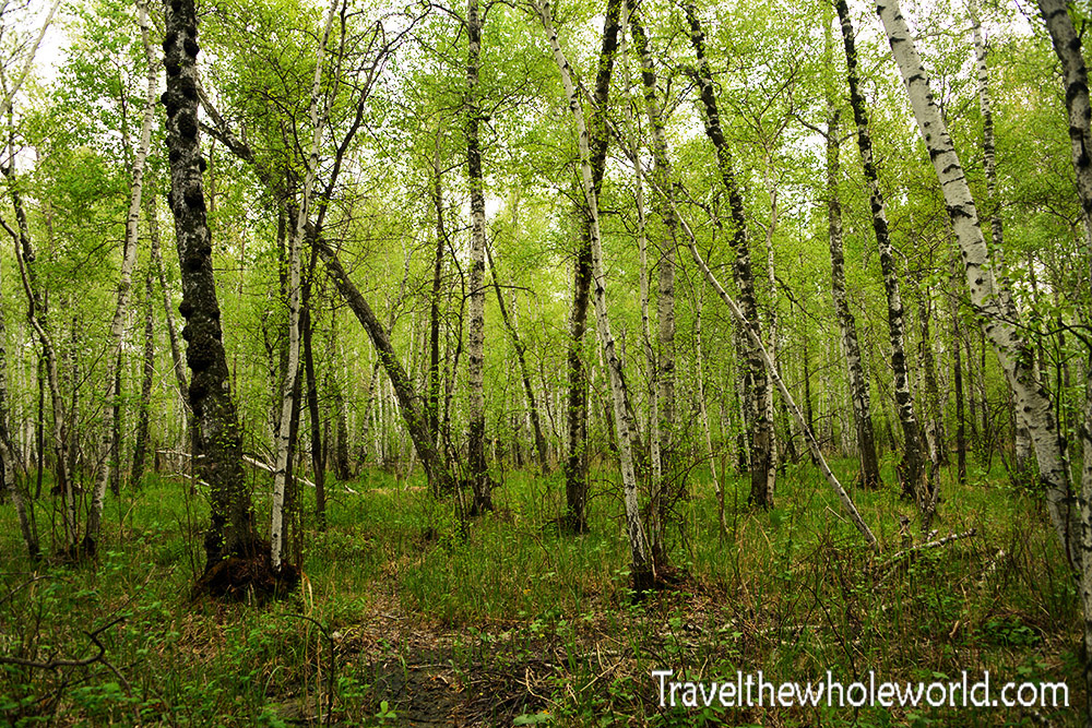 Kazakhstan Burabay Forest
