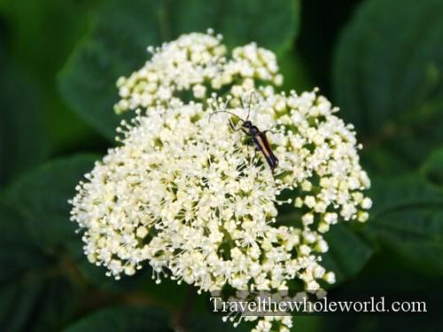 Smoky Mountains Bug