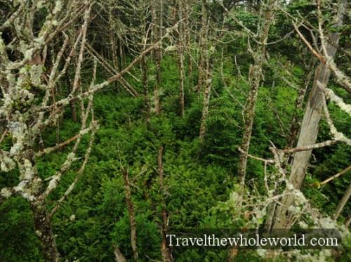 Smoky Mountain High Altitude Forest