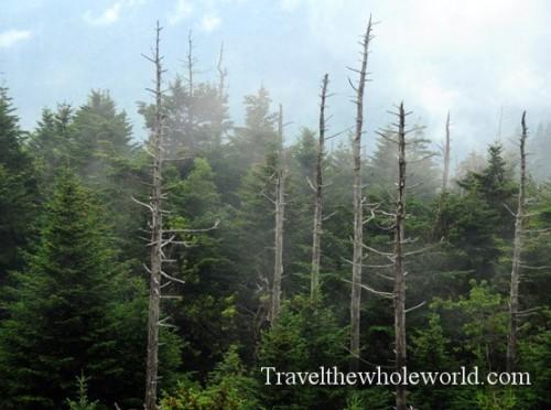 North Carolina Smoky Mountains Mist