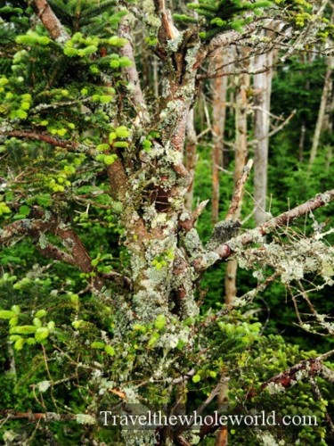 Smoky Mountain Lichen