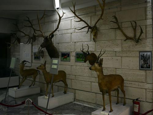 Kazakhstan Almaty Museum Deer