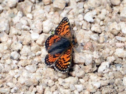 Kazakhstan Big Almaty Lake Butterfly