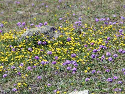 Kazakhstan Flowers