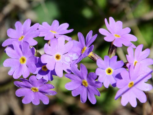 Ile-Alatau National Park Flowers