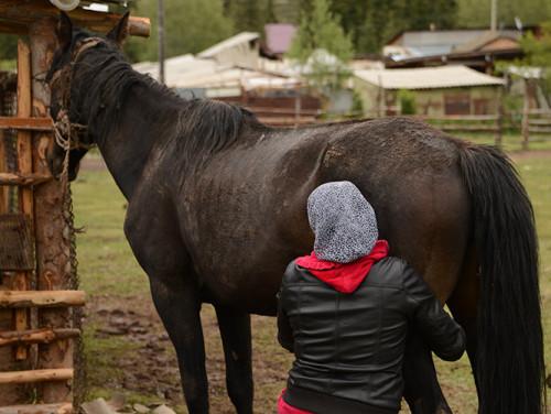 Kyrgyzstan Horse Milking