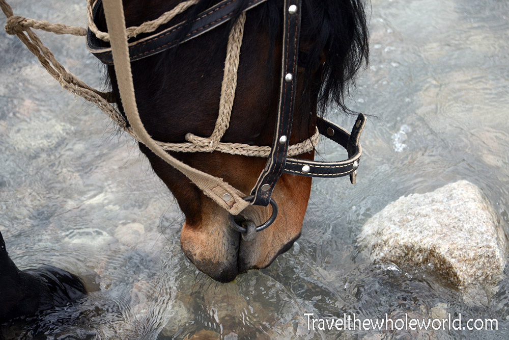 Kyrgyzstan Horseback Riding Drinking Water