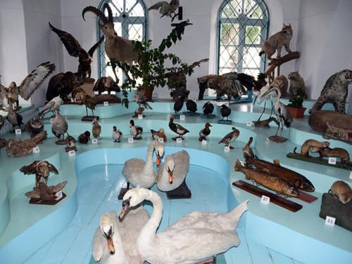 Kyrgyzstan-Karakol-Museum-Animals