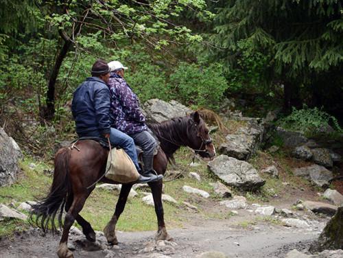 Kyrgyzstan Tian Shan Horse
