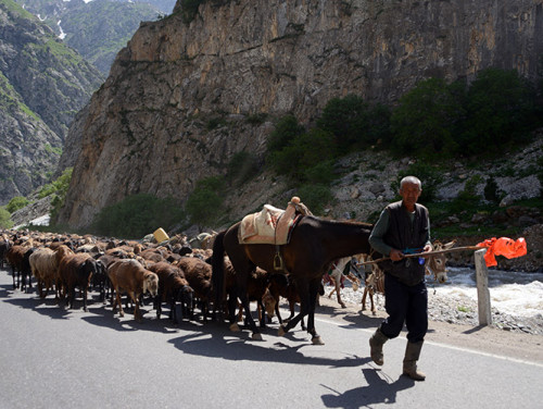 Tajikistan Highway Sheep Herder