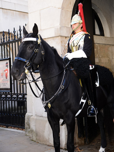 England-London-British-Guard-Horse2