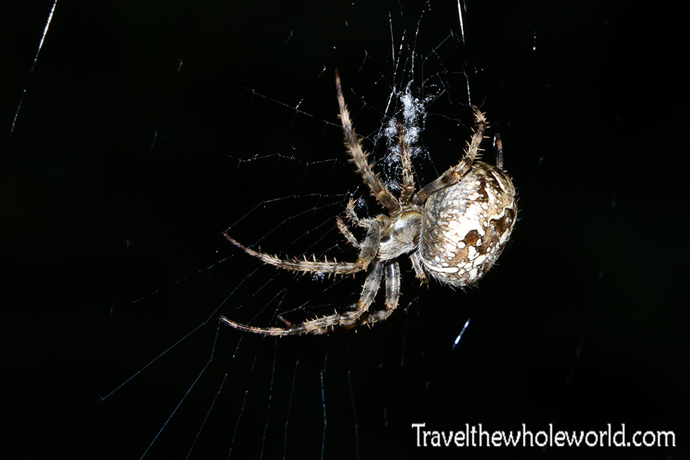 Luxembourg Spider