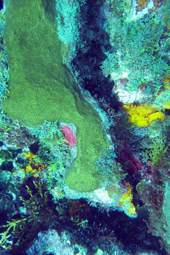 Nicaragua-Big-Corn-Island-Dive-Coral