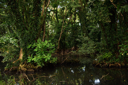 Nicaragua-Big-Corn-Island-Swamp