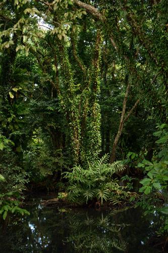 Nicaragua-Big-Corn-Island-Swamp3