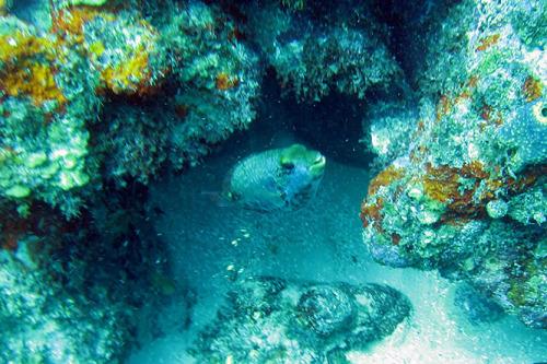 Nicaragua Corn Island Dive Fish Small