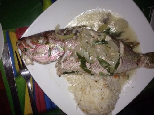 Nicaragua Corn Island Fish