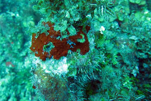 Nicaragua-Corn-Islands-Dive-Coral9