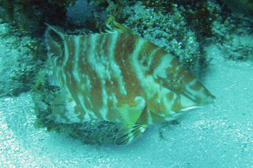 Nicaragua Corn Islands Dive Fish Orange