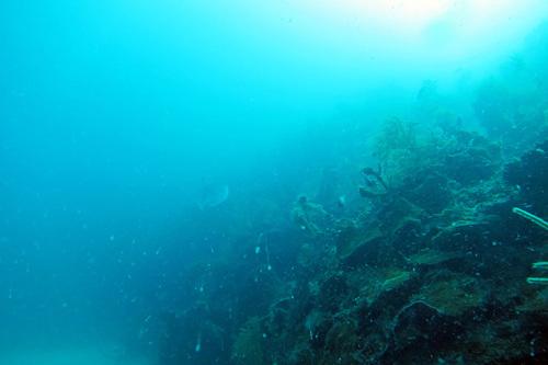 Nicaragua-Corn-Islands-Dive-View