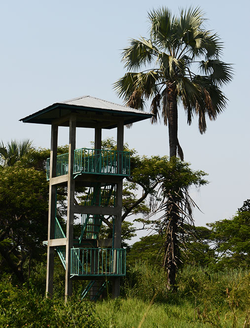 Burundi Rusizi Bird Watching Tower