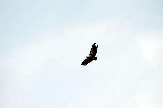 Burundi Rusizi Bird