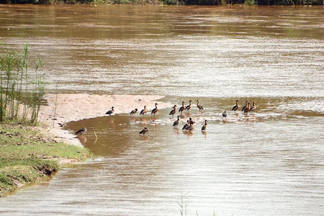 Burundi Rusizi Birds