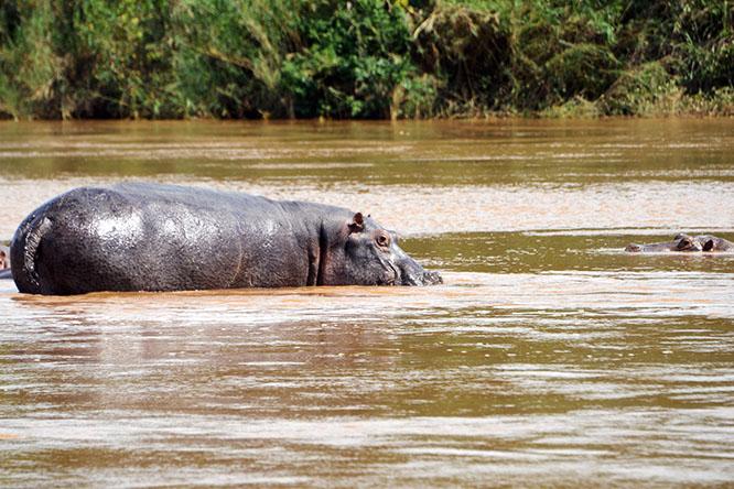Burundi Rusizi Hippos