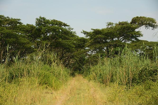 Burundi Rusizi Road