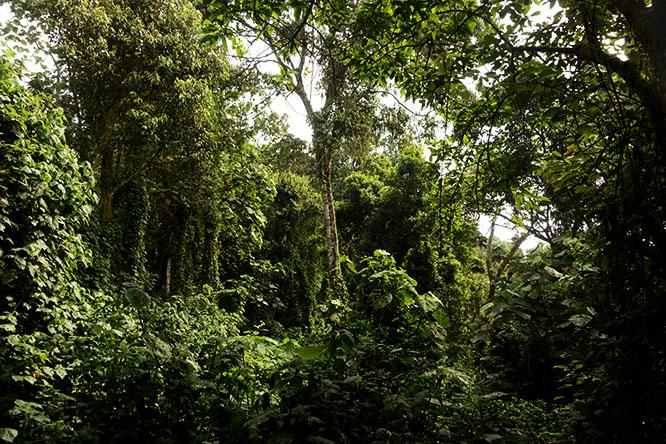 Congo Kahuzi Bieza Forest