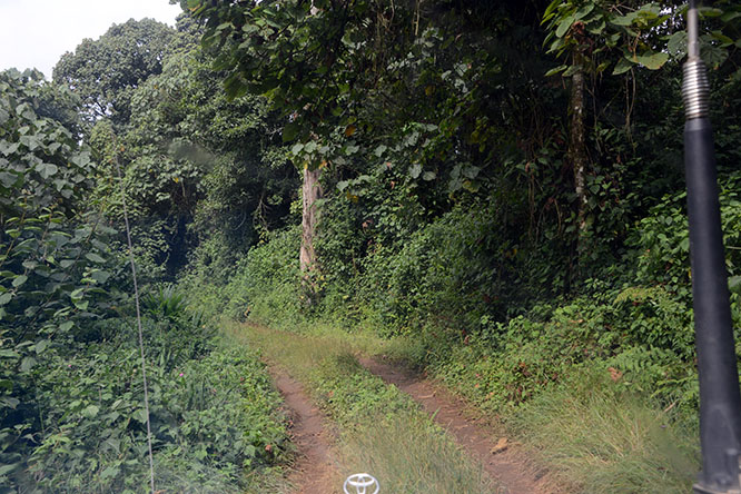 Congo Kahuzi Bieza Road