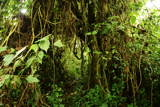 Congo Kahuzi Bieza Trail