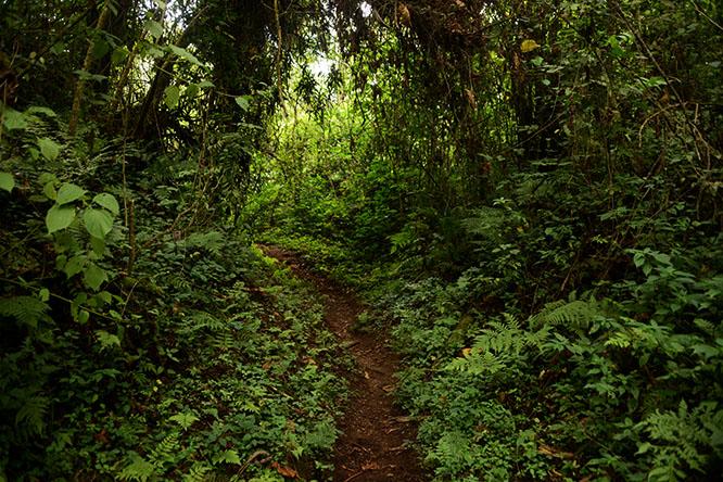 Congo Nyiragongo Volcano Hike