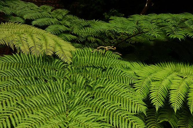 France-Paris-Botanical-Gardens-Ferns