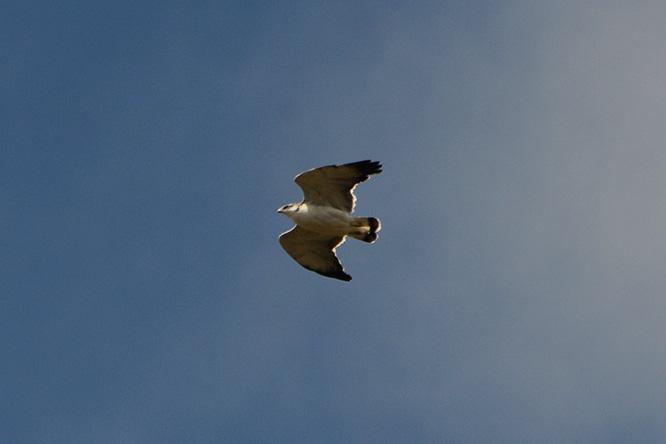 Ecuador Cotopaxi Eagle