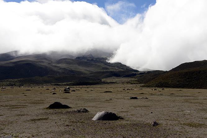 Ecuador Cotopaxi Horses
