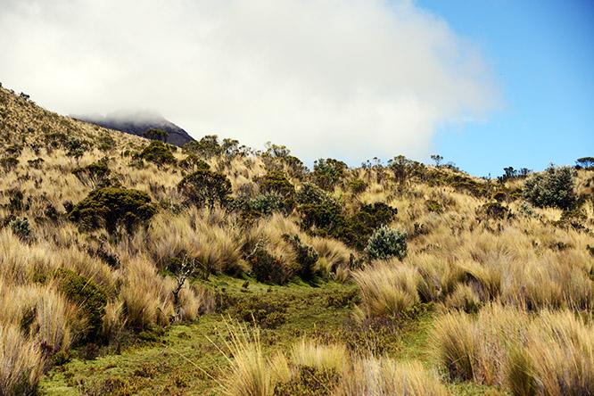 Ecuador-Cotopaxi-Landscape