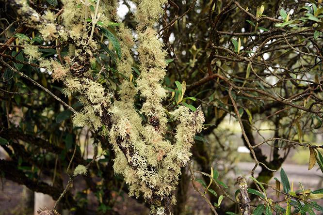 Ecuador Cotopaxi Trees Moss