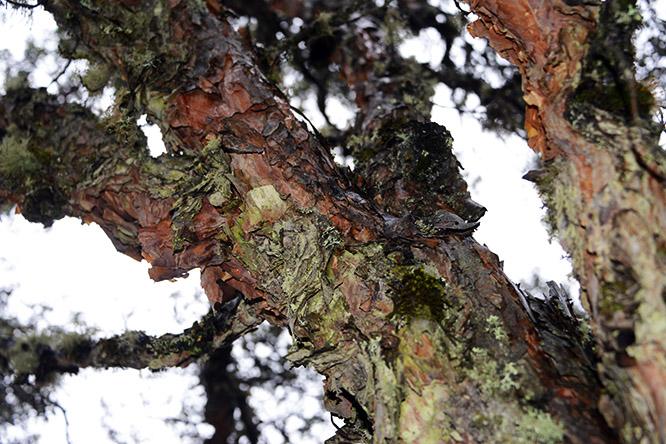 Ecuador Cotopaxi Trees Paper